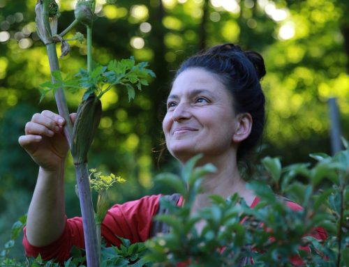 Edible & Medicinal Plant Walk with Dina Falconi: June 12, 11 AM